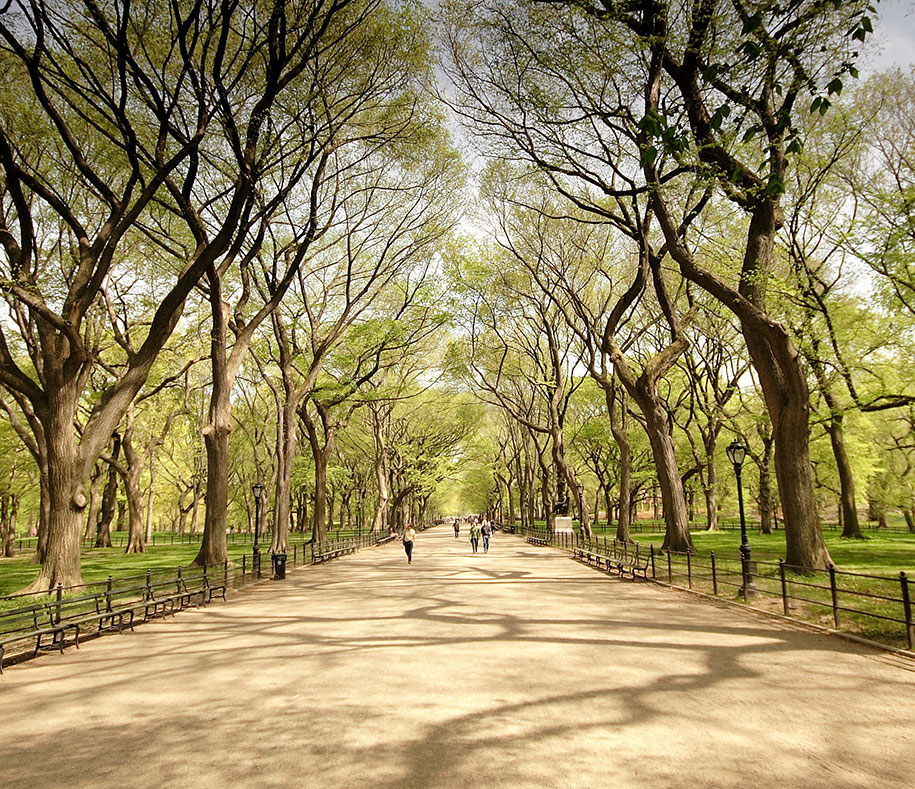 Centeral Park: Different Point Of View Of Famous Landmarks. And How